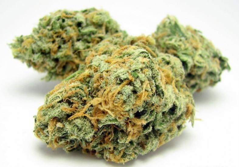 drugs die drogen freie zone cannabis. Black Bedroom Furniture Sets. Home Design Ideas